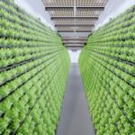 MABEWO AG - Vertical Farming