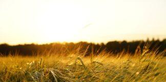 Nutzung Energie und Wertstoffe - Systemwechsel angezeigt
