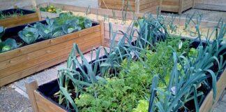 Urbane Gärten - MABEWO AG