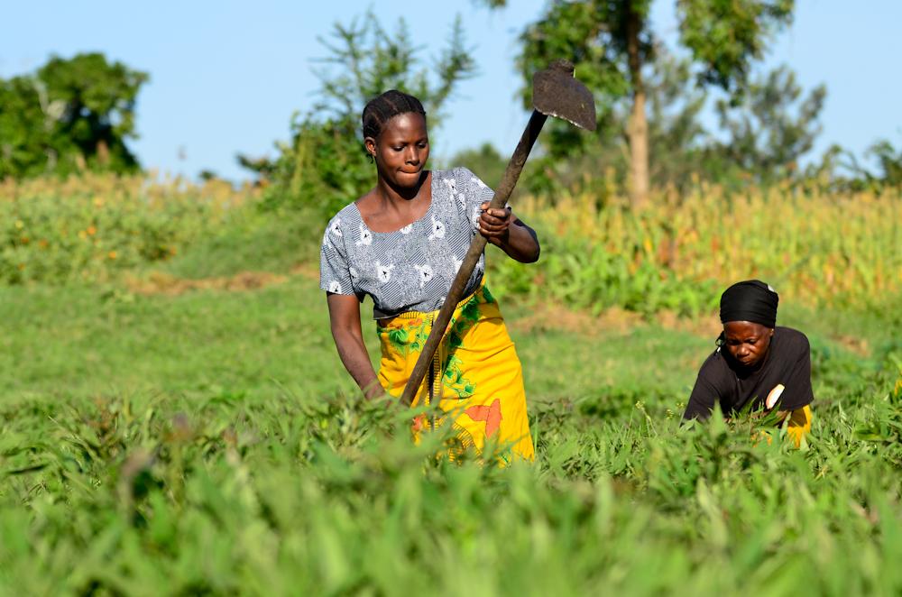 GrowExpress Ltd. Nigeria: Der Rohstoff Erde