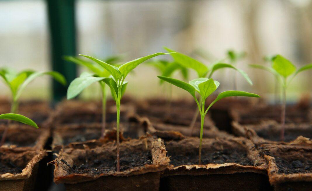 Pflanzenwachstum