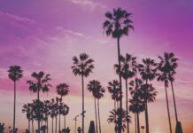 Florida USA: Von der Sonne verwöhnt / Pixabay
