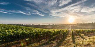 Sonnenenergie nutzen in der Landwirtschaft